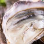 クレールオイスターは通販可!塩田熟成された牡蠣は広島県産!ガイアの夜明け